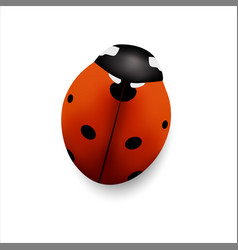 insect seven points ladybug isolated on white vector image