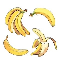 Bananas set in cartoon style vector image