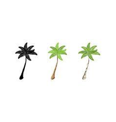 palm trees collection palm trees three palm trees vector image
