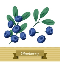 Set of various stylized blueberries vector image