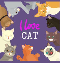 Cats love show banner grooming or veterinary vector