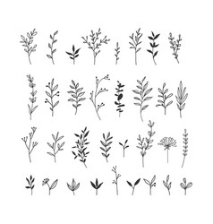Hand drawn floral collection vector
