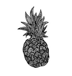 pineapple pencil sketch vector image