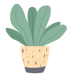 plant growing in pot or planter green indoor vector image