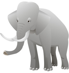 isolated elephant on white background vector image