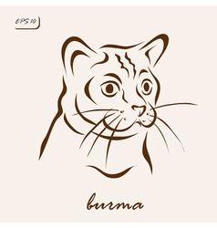 Burma vector image vector image