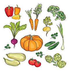 Vegetable set drawn watercolor sign food vector