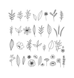 hand drawn floral collection on vector image