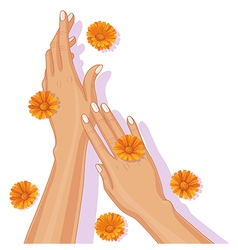 Hands and calendula vector