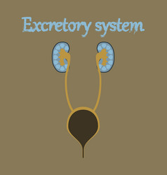 Human organ icon in flat style excretory system vector