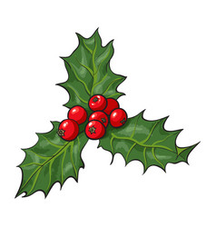 mistletoe branch with leaves and berries vector image
