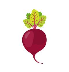 beetroot cartoon style vegetarian fresh food vector image
