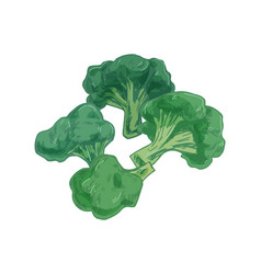broccoli with stalks and tops composition with vector image