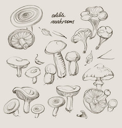 hand drawing a set of mushrooms vector image