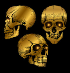 Hand drawn death scary human golden skulls vector