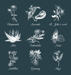 Herbs and spices set hand drawn officinalis vector