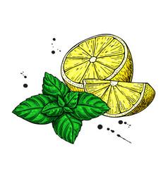 lemons and mint drawing hand drawn slice vector image vector image