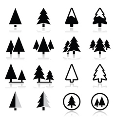 Pine tree icons set vector