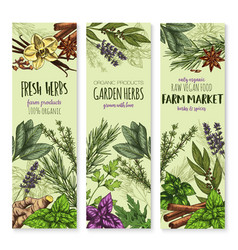 Vecor sketch banners of spices and herbs vector