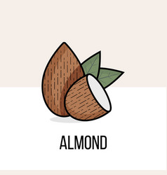 almond nut with leaves flat natural organic vector image