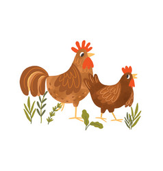 funny hen and rooster walking together couple vector image