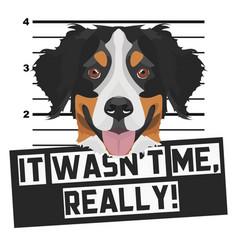 Mugshot mug shot bernese mountain dog vector