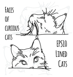 Two curious cat muzzles vector