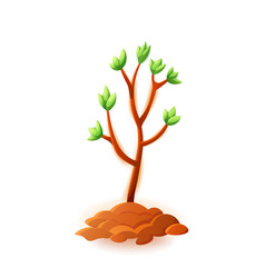 young tree isolated on white vector image