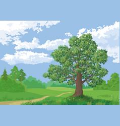 landscape summer forest and oak tree vector image vector image