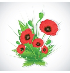 Poppy flowers bouquet vector image vector image