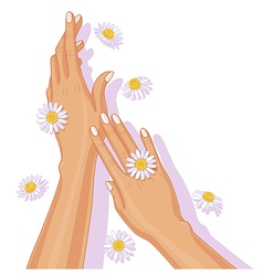 hands with chamomile vector image vector image