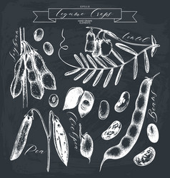 vintage set of legumes on chalkboard vector image