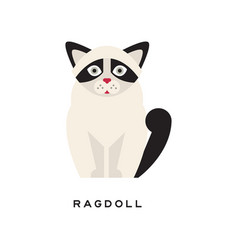 Cute portrait of ragdoll cat cartoon purebred pet vector