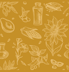 plants or grains oil ingredients corn and vector image