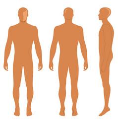 fashion body full length bald template figure vector image vector image