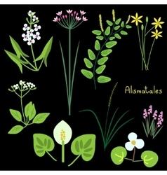 Alismatales plant order vector
