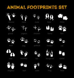 Animal track black background vector