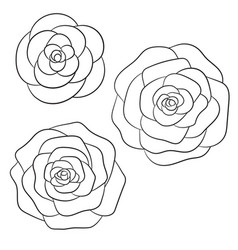 Roses black outline on the white background vector