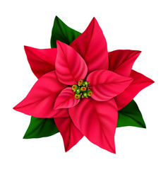 Christmas star decorative poinsettia flower vector