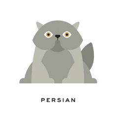 fluffy gray persian cat adorable long-haired vector image