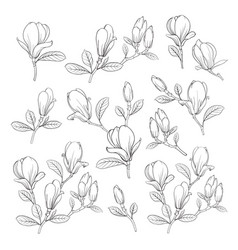 set floral elements bundle linear sketch of vector image