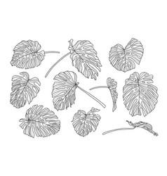 set monstera leaves line art design hand vector image