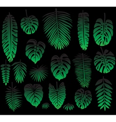 Set of Tropical Leaves on black vector