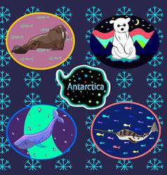 Antarctic set vector