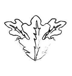 Edge delicious leaves lettuce organ food vector