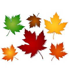 Maple leaves fall color options vector image