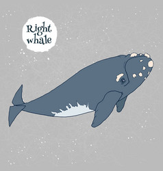 right whale vector image
