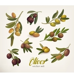 Set of green and black olive branches with twig vector image vector image