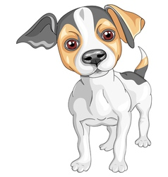 Sketch dog Jack Russell Terrier breed vector