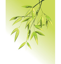 bamboo background vector image